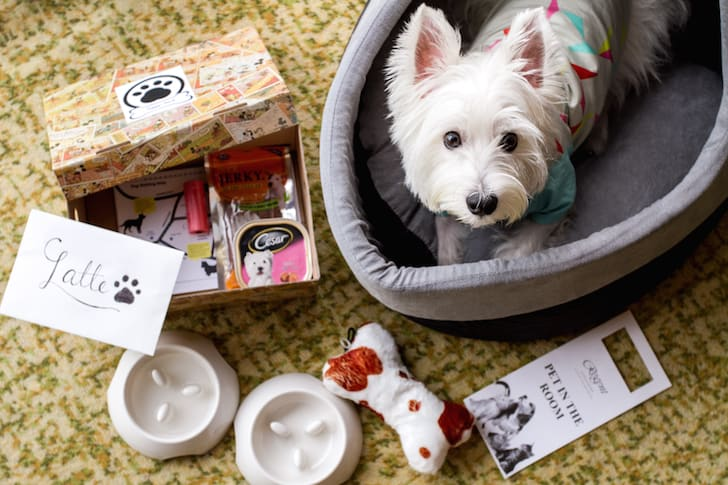 5 Pet Friendly Hotels In Singapore For The Best Staycation Experience With Your Dog