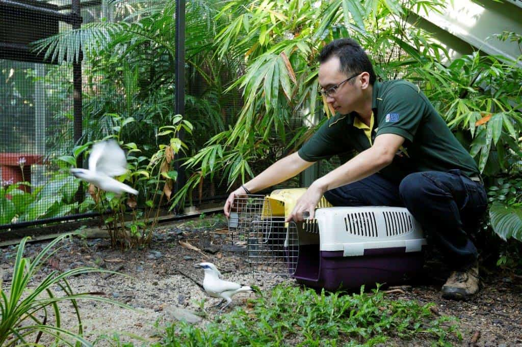 """Meet Singapore's """"Bird Man"""" Who Rescued 109 Endangered Doves"""
