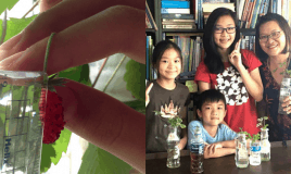 These Children Show You How To Grow Strawberries In Your…