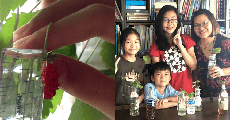 These Children Show You How To Grow Strawberries In Your Home