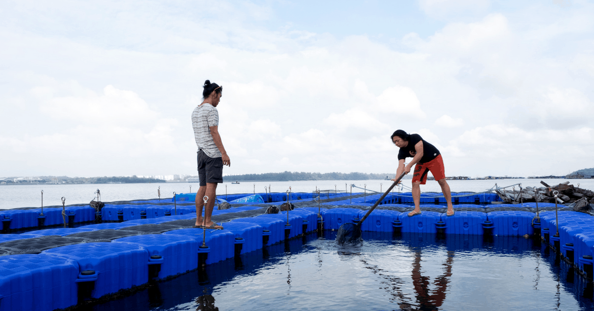 I Tried Fish Farming In Singapore For The First Time