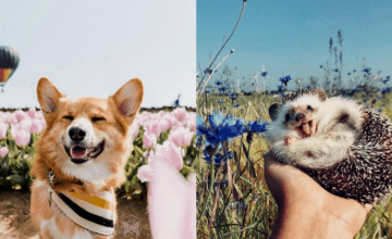 Yes, Your Pet Can Now Be An Influencer