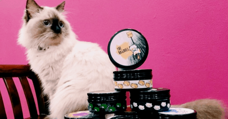 Within A Year, Her Adorable Cat Tea Brand Expanded To 22 Stores And 4 Countries