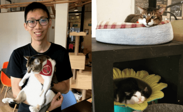 Born Out Of Love For Our Local Cats, This Cafe Lets You Get Closer To These Feline Breeds